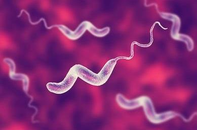 Qual é a maior causa de infecções gastrointestinais?
