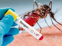 DENGUE: Determinação de IgG/IgM anti-vírus por método imunocromatográfico.